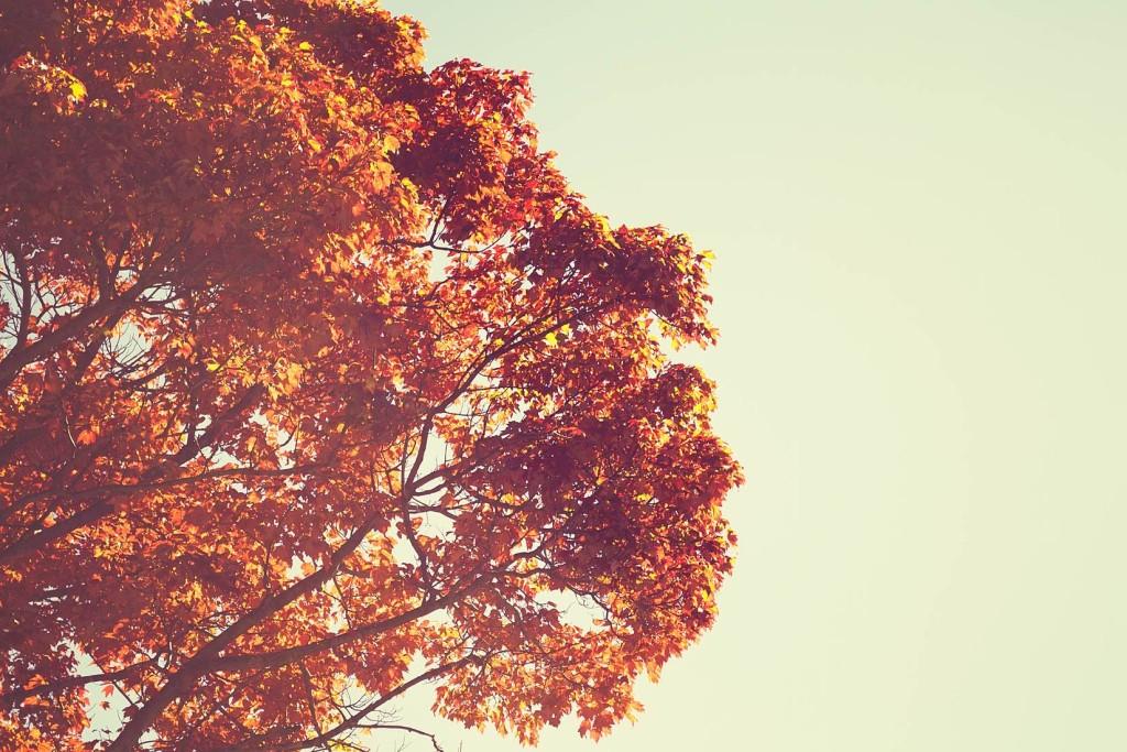 Retro-Fall