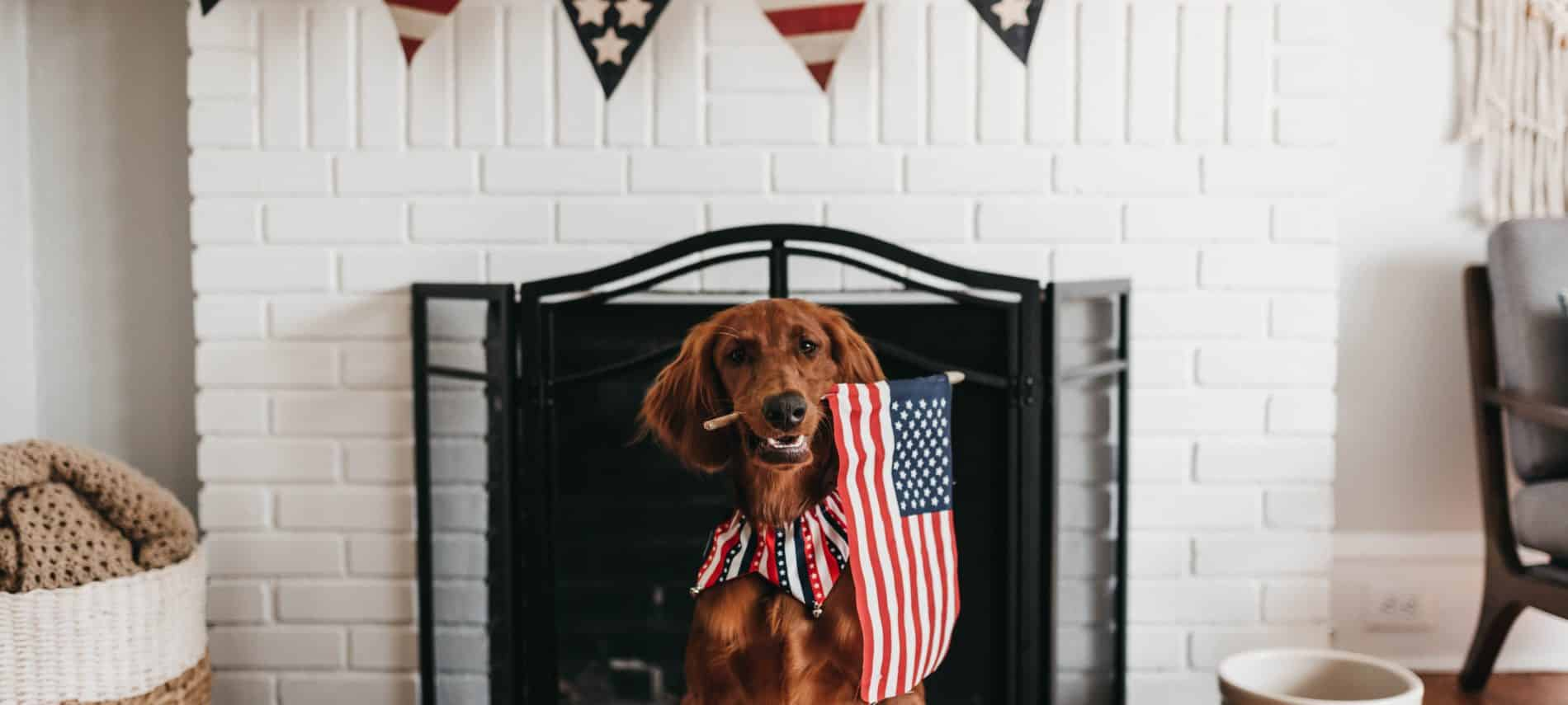 dog wearing a patriotic scarf holding an American flag in his teeth while sitting in front of a fire place