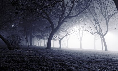 ghostly fog in forest of trees on a dark night