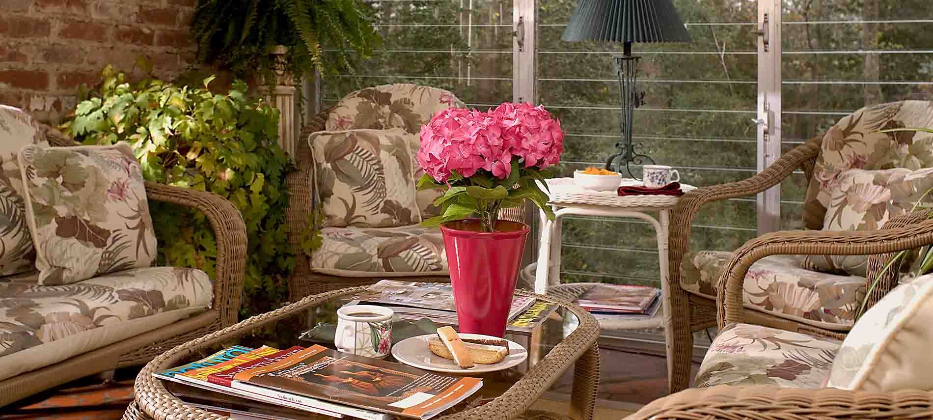 pink potted hydrangea plant on wicker and glass table with magazines and plate of biscotti