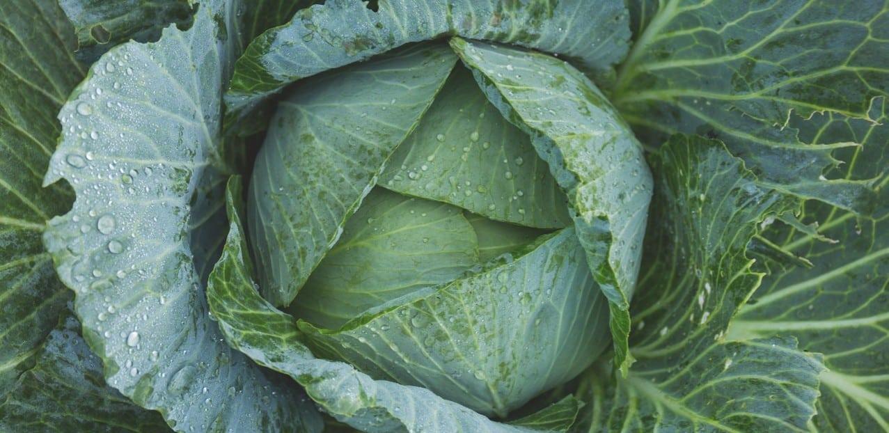 Virginia Fall Gardening Tips